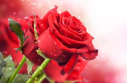 flores liofilizadas madrid