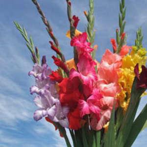Arreglos Florales Para Bodas Madrid Arreglos Florales Vikenzo